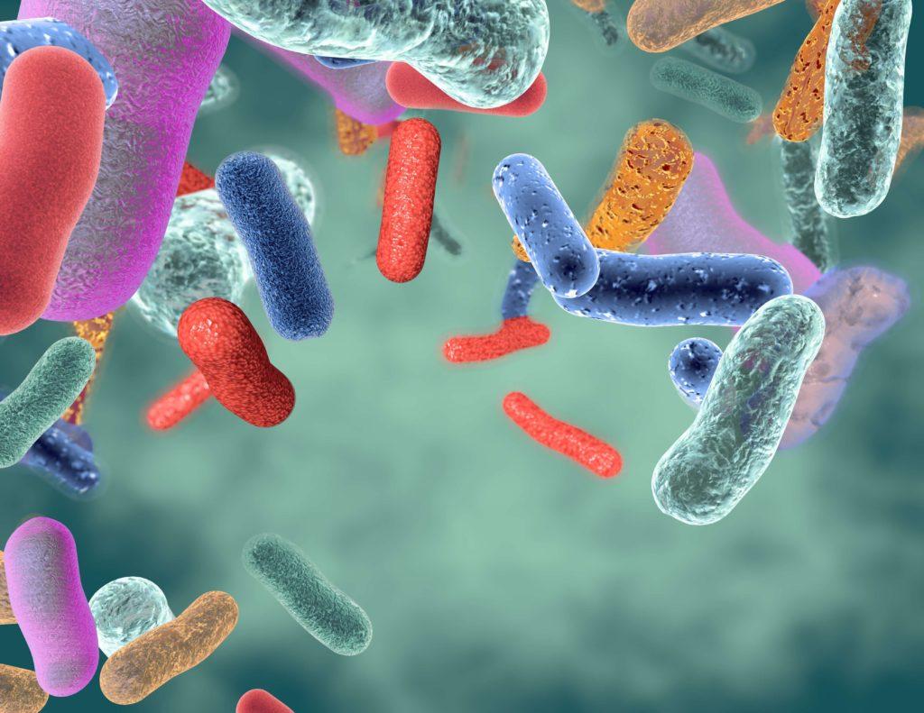 Healthy Gut Bacteria - GI MAP Testing